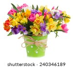 Blue And Yellow Freesia And...