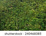 Laurel Forest In Canary Island...