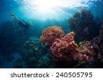 Free Diver Exploring Vivid...