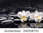 beautiful orchid with zen... | Shutterstock . vector #240528751