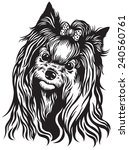 dog head  yorkshire terrier... | Shutterstock .eps vector #240560761