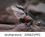 eastern water dragon  australia | Shutterstock . vector #240621991