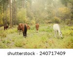 natural herd of horses with... | Shutterstock . vector #240717409