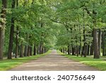 broad oak alley in the old park | Shutterstock . vector #240756649