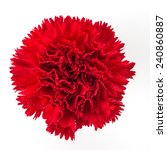 Red Carnation Flower Isolated...