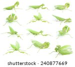 mantis religiosa | Shutterstock . vector #240877669
