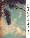 coconut palm tree against blue... | Shutterstock . vector #240996175