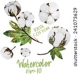 natural cotton. watercolor... | Shutterstock .eps vector #241073629
