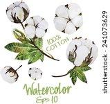 natural cotton. watercolor... | Shutterstock .eps vector #241073629