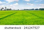 Rice Field Green Grass Blue Sk...