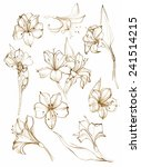 hand drawn floral set.... | Shutterstock . vector #241514215