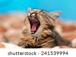 Stock photo angry cat 241539994