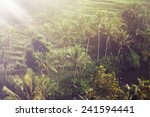 beautiful landscape of humid... | Shutterstock . vector #241594441