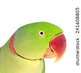 Small photo of Bird ,Closeup Alexandrine parakeet or Alexandrine parrot (Psittacula eupatria) isolated on white backgroud