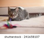 Stock photo cat stalking his feather toy at home 241658107