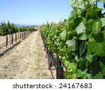 Attractive Central California Vineyard in the Spring - stock photo