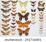 Mounted North American Moths...