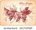 wine grapes vintage style... | Shutterstock .eps vector #241742989