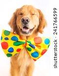 A Happy Golden Retriever Dog...