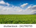 green fields  | Shutterstock . vector #241790755