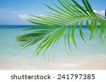 Palm Leaf  Blue Sea And...