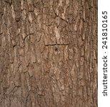 Texture Of Old Tree Bark
