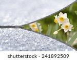Zipper Revealing Narcissus...