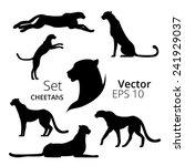 cheetah set vector | Shutterstock .eps vector #241929037