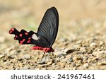 butterfly  common windmill   ... | Shutterstock . vector #241967461
