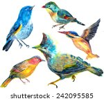 hand draw bird on paper | Shutterstock . vector #242095585
