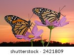 Two Monarch Butterflies Rest O...