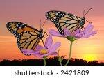 Two Monarch Butterflies Rest O...
