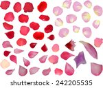 Stock vector illustration with rose petals isolated on white background 242205535