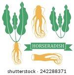 horseradish. vector illustration | Shutterstock .eps vector #242288371