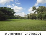 green grass and trees in public ... | Shutterstock . vector #242406301