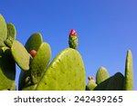 Prickly Pear Cactus Pink Flowe...