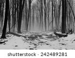 Alone. A Remote Winter Forest...