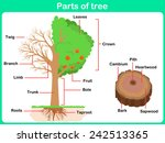 Leaning Parts Of Tree For Kids...