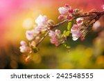 Blossom Tree Over Nature...