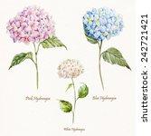 hydrangea  watercolor  flower ...   Shutterstock . vector #242721421