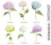 Hydrangea  Watercolor  Flowers  ...