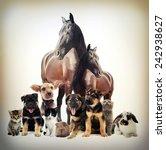 Stock photo pets 242938627