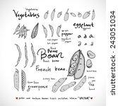 food menu illustrations   set... | Shutterstock .eps vector #243051034