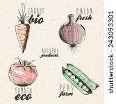 hand drawn vegetables... | Shutterstock .eps vector #243093301