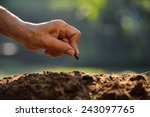 farmer's hand planting a seed... | Shutterstock . vector #243097765