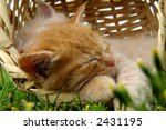 Stock photo two sleeping kittens in the basket 2431195