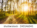 Small photo of Path Road Way Pathway On Sunny Day In Summer Forest. Sunbeams Pour Through Trees. Russian Nature