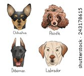 set of hand drawn dogs  vector...   Shutterstock .eps vector #243178615