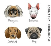 set of hand drawn dogs  vector...   Shutterstock .eps vector #243178879