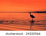 Water Bird At Sunset   Port...